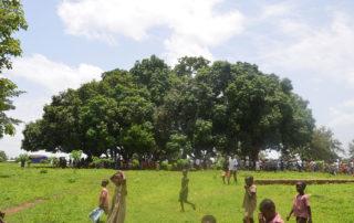 Der Versammlungsplatz liegt unter 4 weit herausragenden, schattenspendenden Bäumen.