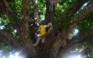 Da unter den Bäumen kein Platz mehr ist, klettern viele Jugendliche nach oben ins Geäst.
