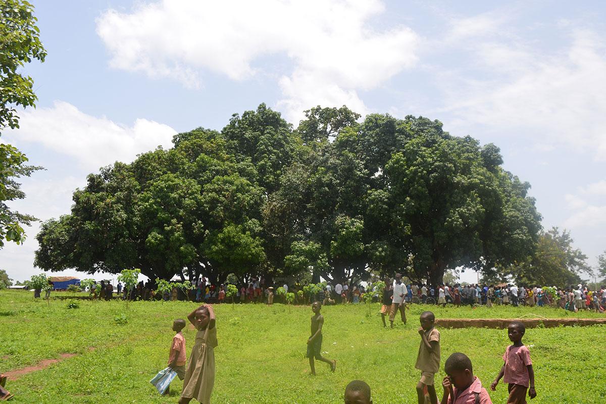 Der Versammlungsplatz unter Bäumen ist sehr angenehm