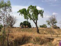 Das Dorf liegt malerisch unter mehreren Mangobäumen