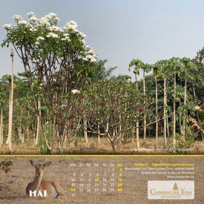 Togo-Kalender 2021 - Mai